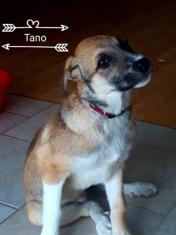tano-10