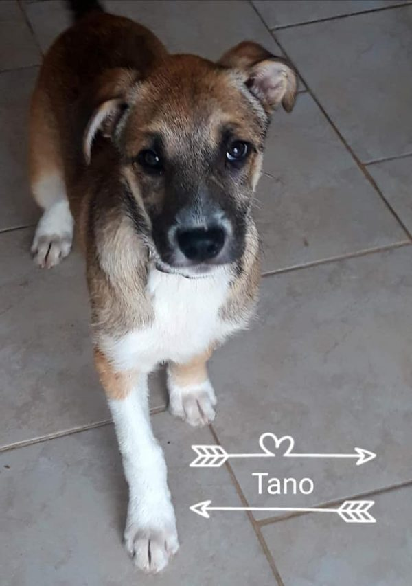 tano-8