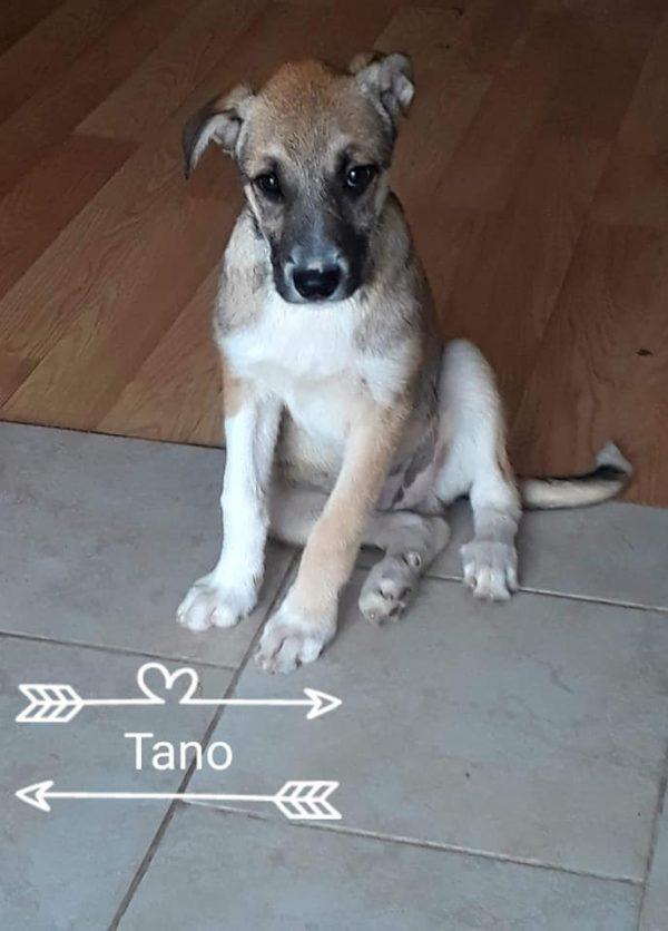 tano-9